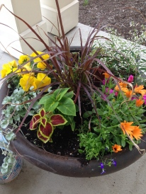 Early summer plantings